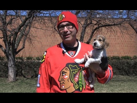 Steve Dale: Chicago Blackhawks & Pet Adoption