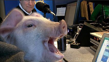 Steve Cochran's Pig Pardon