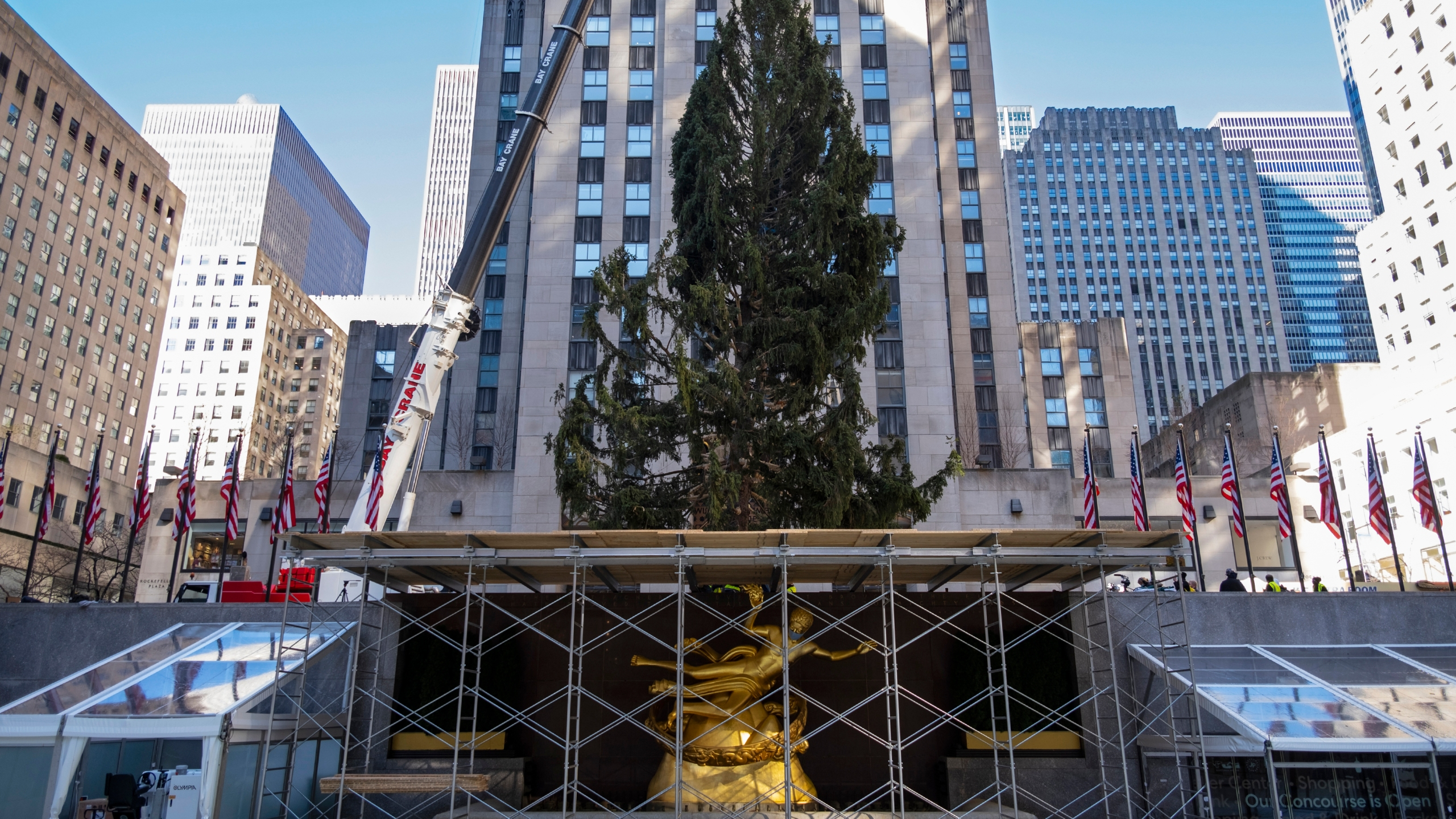 Christmas Programs In The Chicago Suburbs For 2020 Rockefeller Center Christmas tree goes up; lighting Dec. 2 | WGN