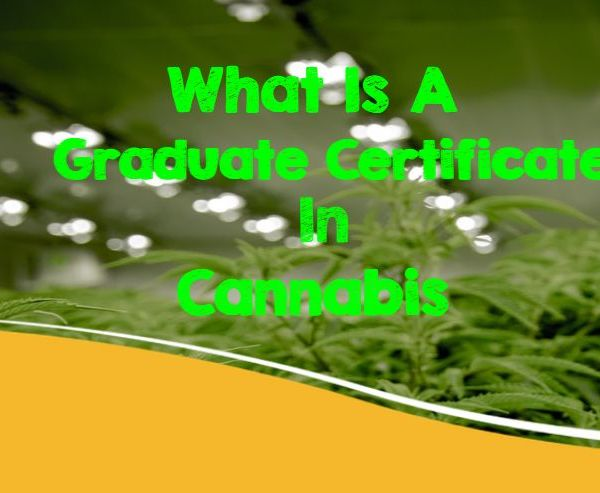 Marijuana, CBD, Cannabis Control, Mason Vera Paine, Millennial, Hemp, Graduate Certificate, Cannabis, Excelsior College